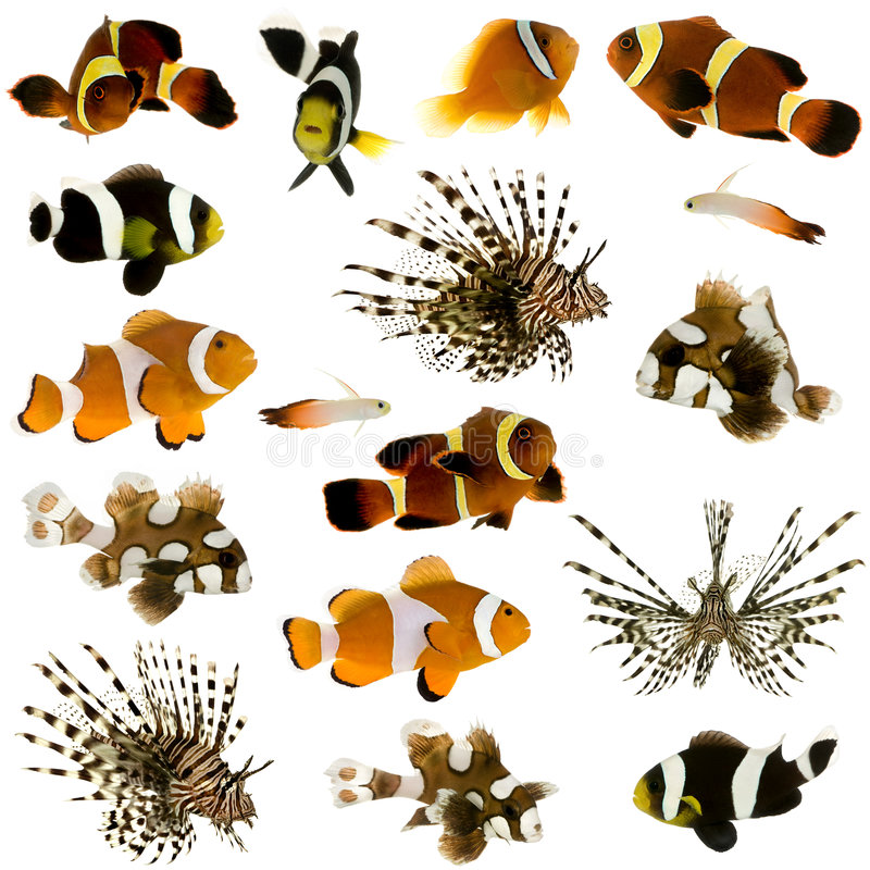 Inzameling van 17 tropische vissen royalty-vrije illustratie
