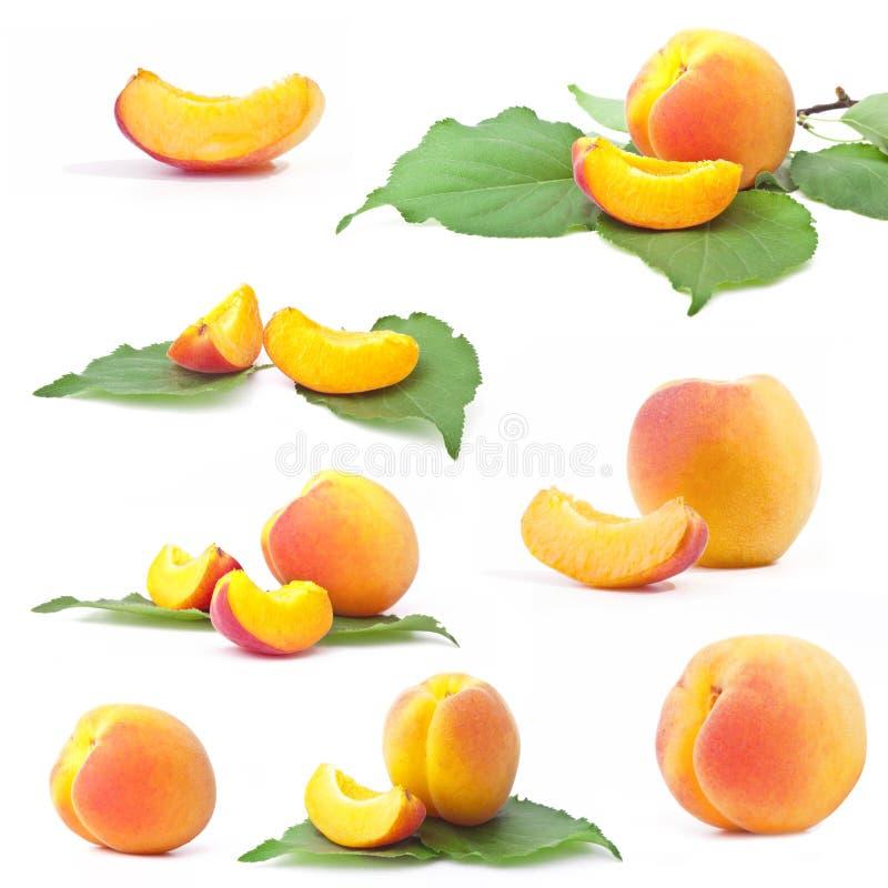 Inzameling van abrikoos stock fotografie