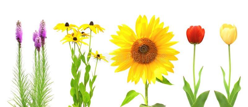 Inzameling van bloemen stock fotografie