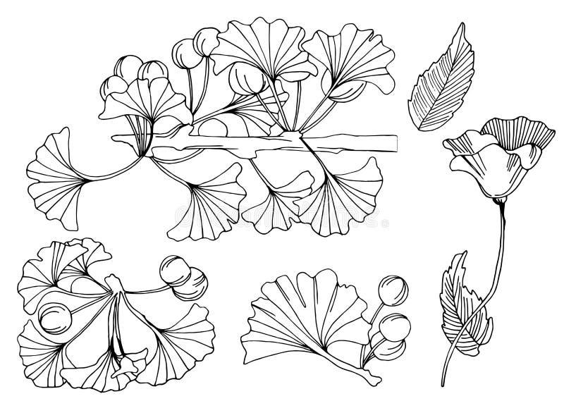 Inzameling van bloemeninktkunst getrokken elementen vector illustratie