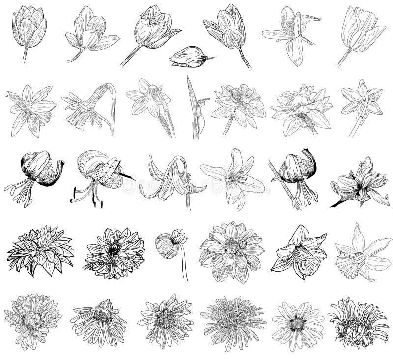 Inzameling van bloemenschetsen royalty-vrije stock afbeelding