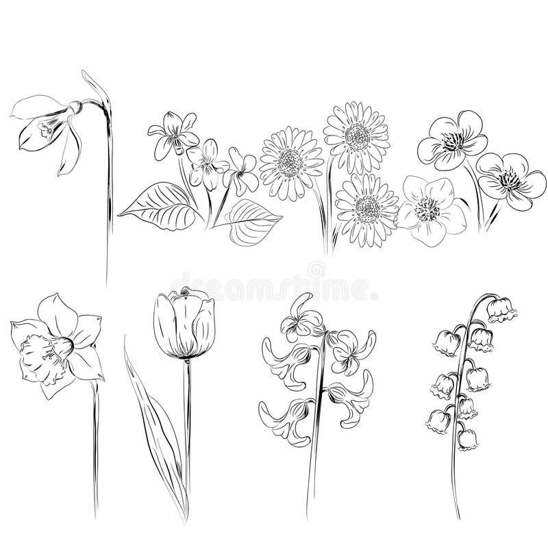 Inzameling van bloemschetsen royalty-vrije illustratie