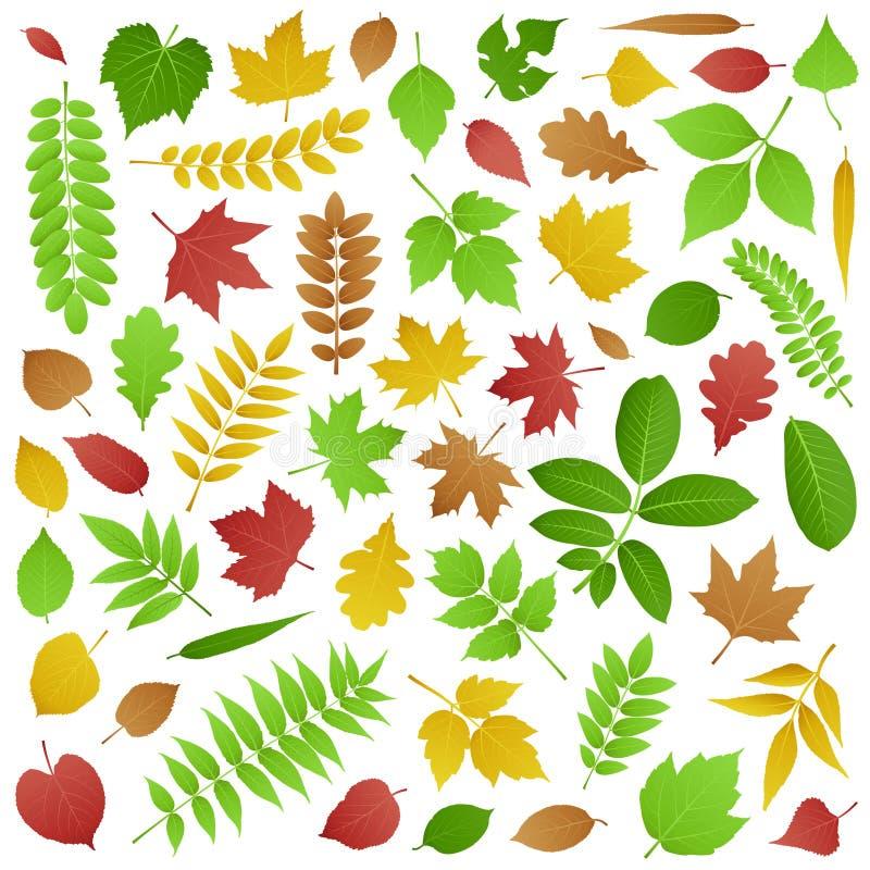 Inzameling van de Groene en Bladeren van de Herfst stock illustratie