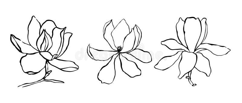 Inzameling van de schets de Bloemenplantkunde De tekeningen van de magnoliabloem Moderne enige lijnkunst, esthetische contour Zwa vector illustratie