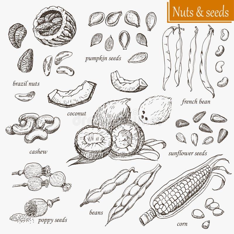 Inzameling van geïsoleerde noten en zaden royalty-vrije illustratie