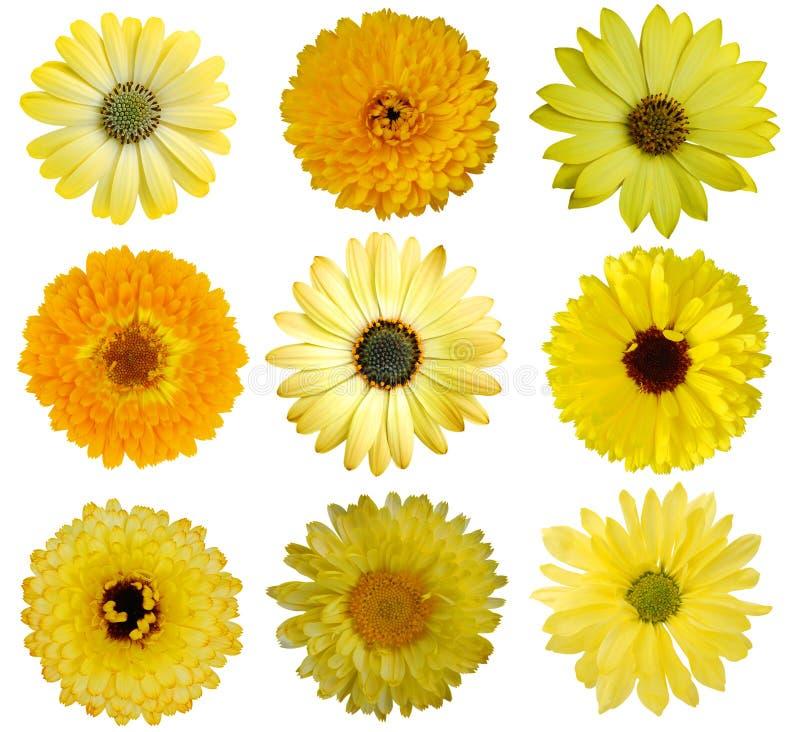 Inzameling van Gele Bloemen royalty-vrije stock afbeeldingen