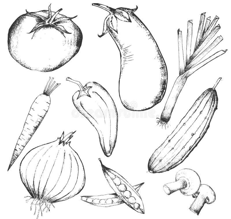 Inzameling van hand-drawn groenten stock illustratie