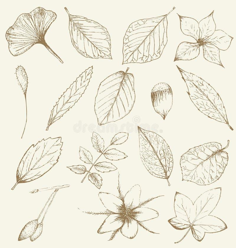 Inzameling van hand getrokken installaties vector illustratie