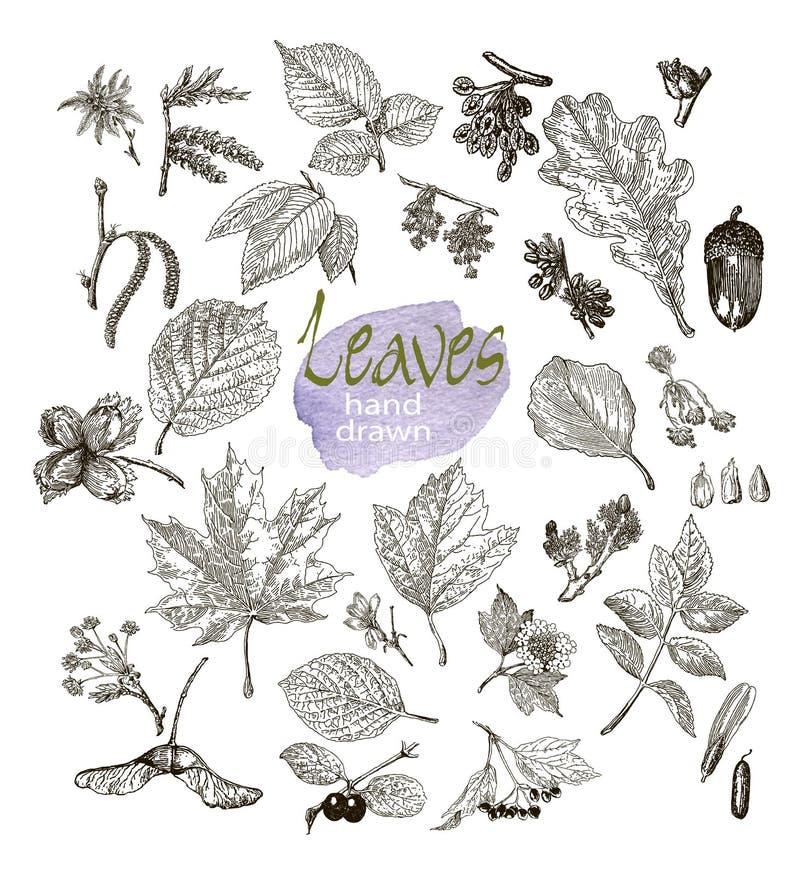 Inzameling van hoogst gedetailleerde hand getrokken die bladeren, fruit en bloeiwijze op witte achtergrond worden geïsoleerd vector illustratie