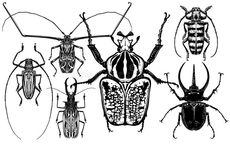 Inzameling van insecten Kevers op witte achtergrond worden ge?soleerd die stock illustratie