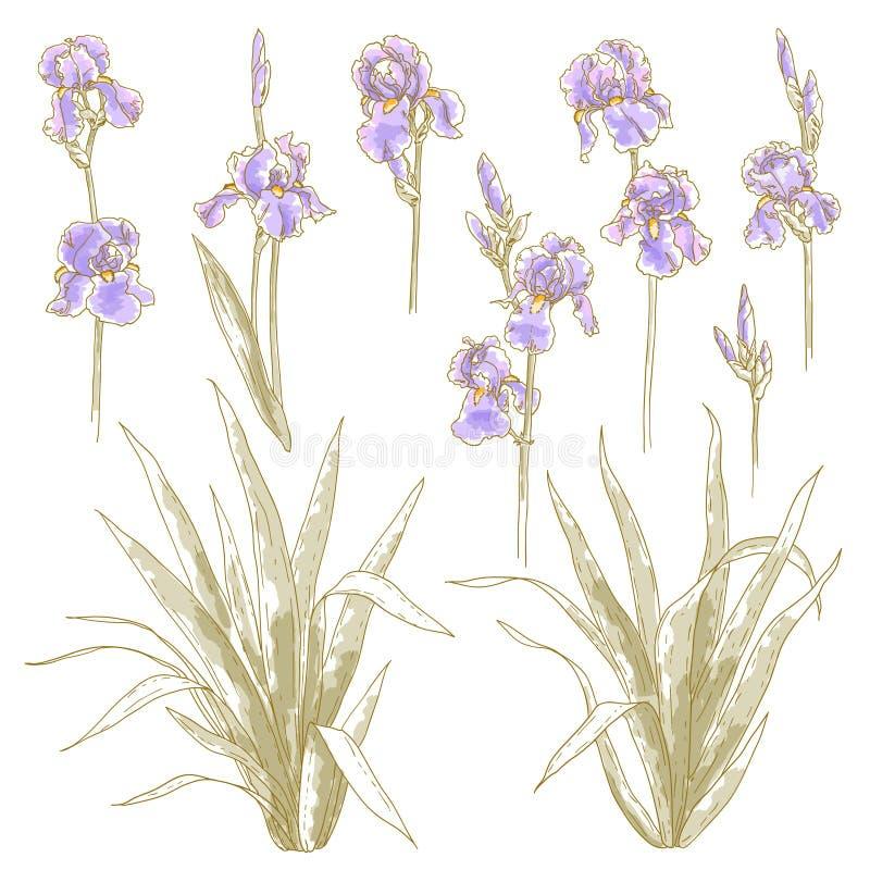 Inzameling van irisbloemen stock illustratie