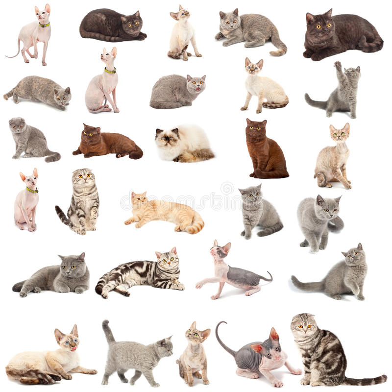 Inzameling van katten royalty-vrije stock foto