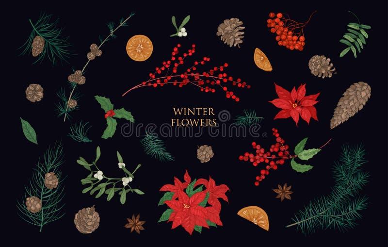 Inzameling van mooie de winter decoratieve die installaties op zwarte achtergrond wordt geïsoleerd Bundel van traditionele natuur royalty-vrije illustratie
