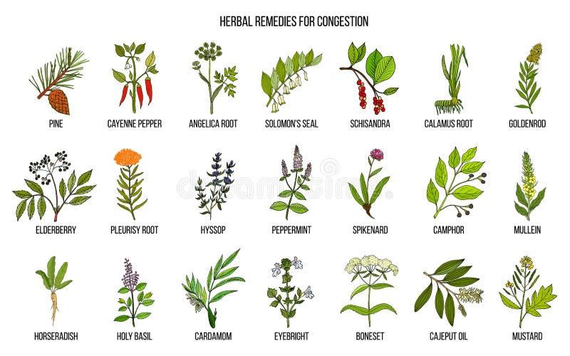 Inzameling van natuurlijke kruiden voor congestie stock illustratie