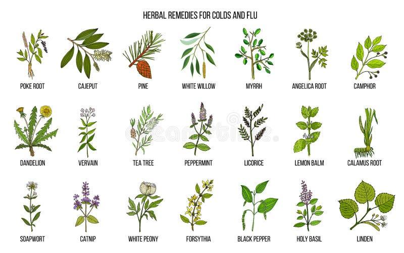 Inzameling van natuurlijke kruiden voor koude en griep royalty-vrije illustratie