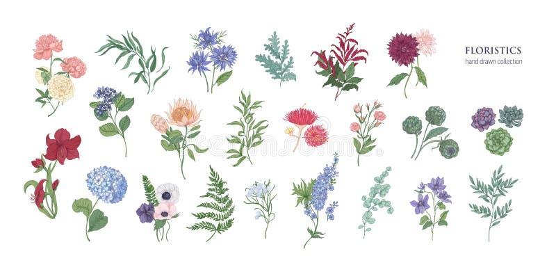 Inzameling van populaire floristische bloemen en decoratieve die installaties op witte achtergrond worden geïsoleerd Reeks van mo stock illustratie