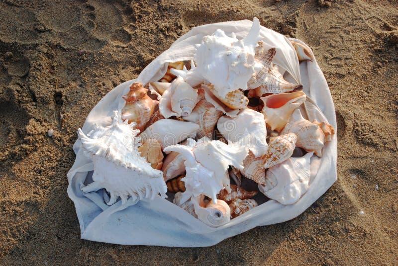 Inzameling van shells stock fotografie