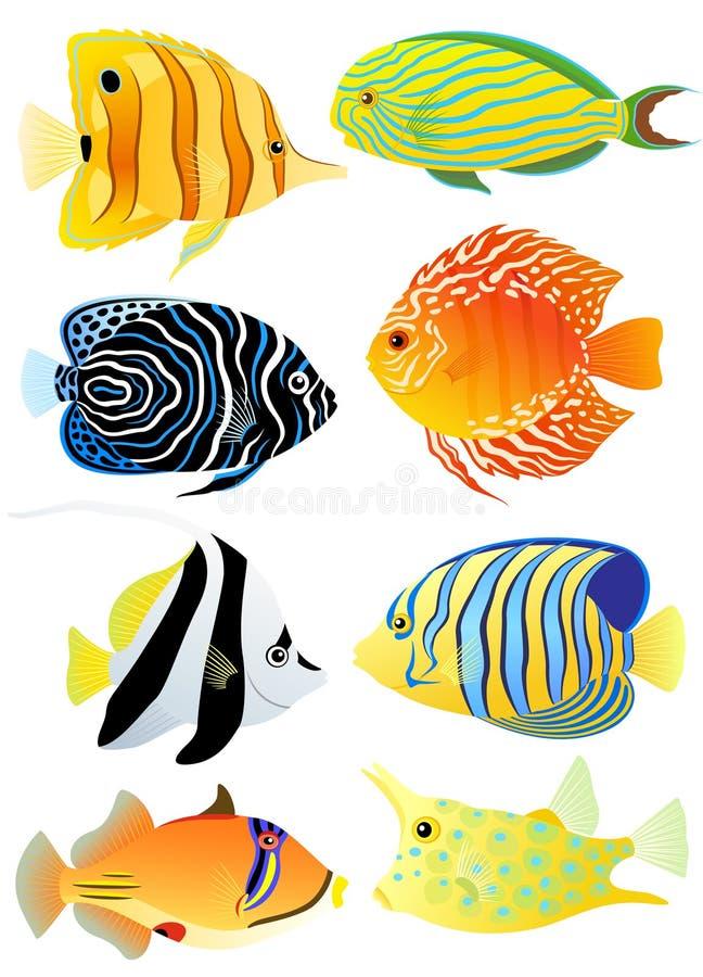 Inzameling van tropische vissen stock illustratie