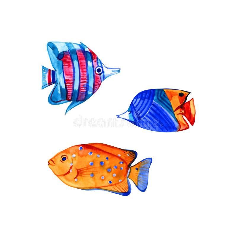 Inzameling van tropische vissen De hand getrokken vissen van het waterverfkoraalrif vector illustratie