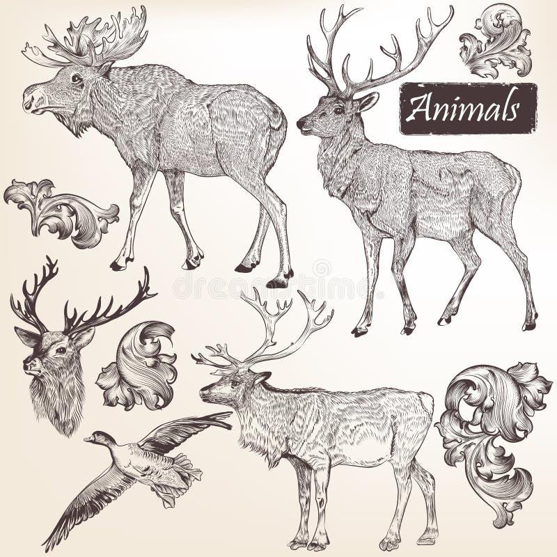 Inzameling van vectorhand getrokken dieren in uitstekende stijl royalty-vrije illustratie