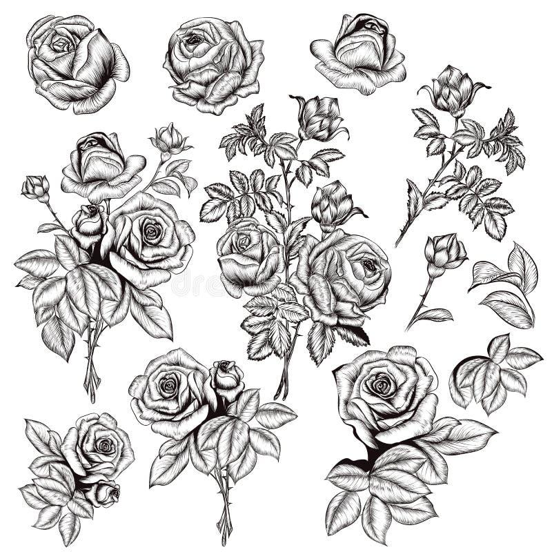Inzameling van vectorhand getrokken rozen voor ontwerp in gegraveerd varkenskot vector illustratie