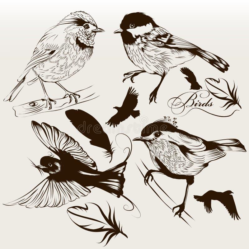 Inzameling van vectorhand getrokken vogels voor ontwerp stock illustratie