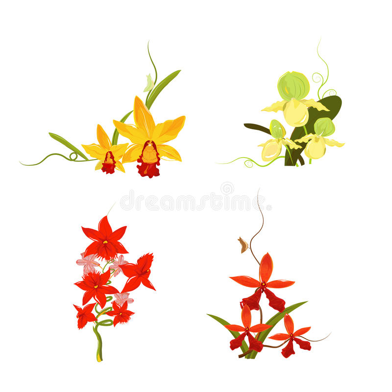 Inzameling van Vectororchidee 01. stock illustratie