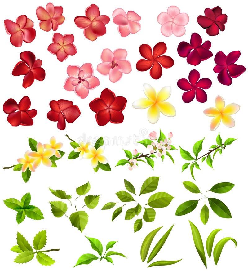 Inzameling van verschillende bloemen en bladeren vector illustratie