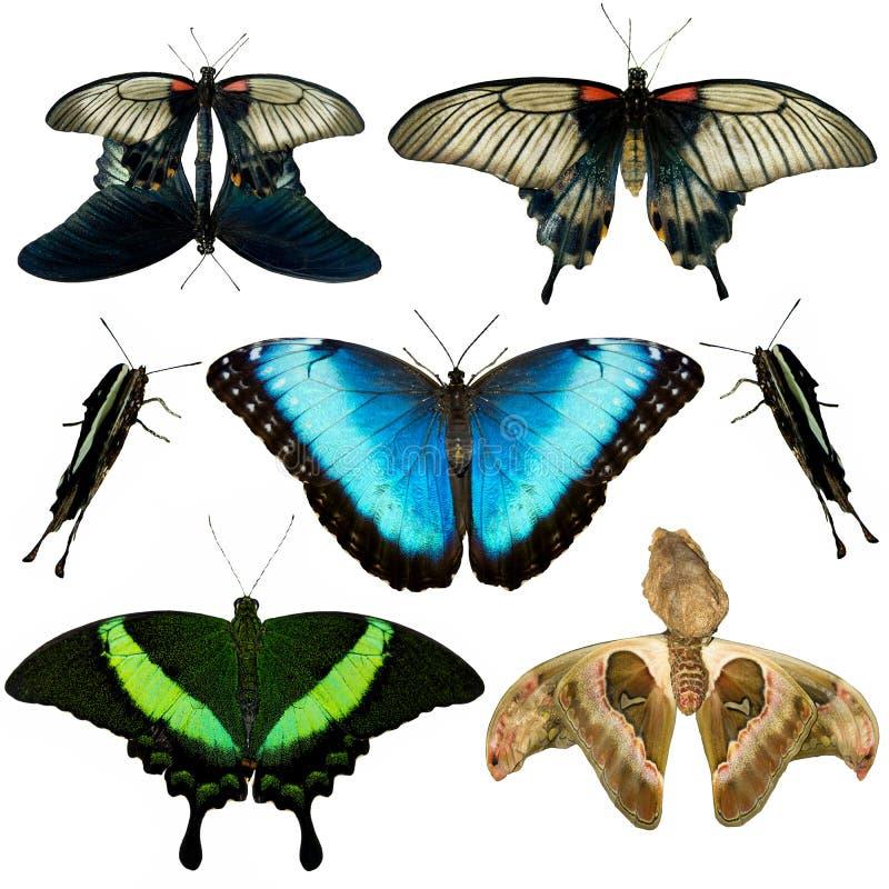 Inzameling van verschillende vlinders royalty-vrije stock afbeelding