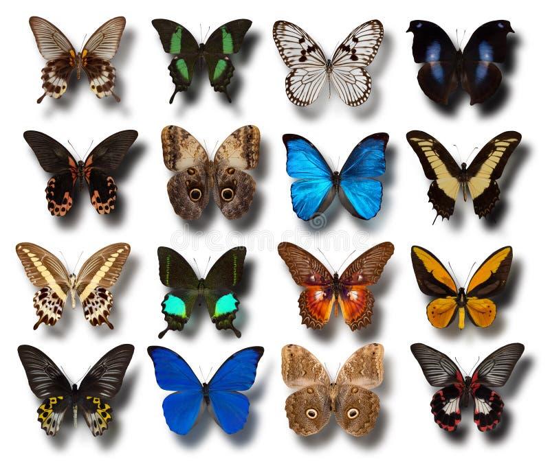 Inzameling van verschillende vlinders op een witte achtergrond stock foto