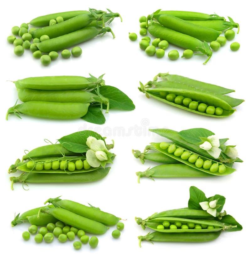 Inzameling van verse groene erwt stock foto