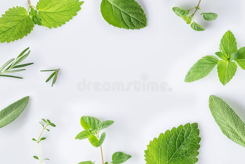 Inzameling van verse kruidensalie, rozemarijn, orego, thyme, citroen royalty-vrije stock afbeeldingen