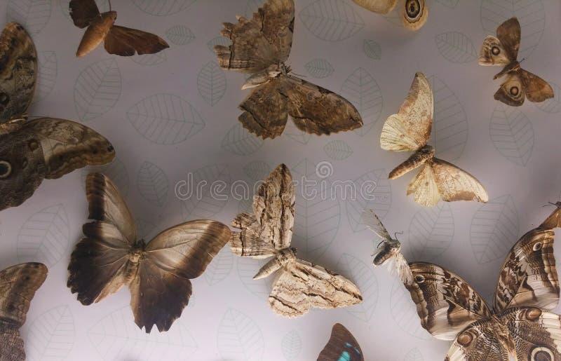 Inzameling van vlinders met het slaan van vormen op hun vleugels royalty-vrije stock fotografie