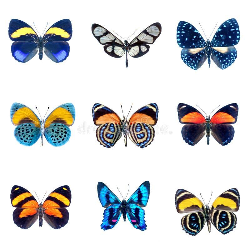 Inzameling van Vlinders op een witte achtergrond stock foto