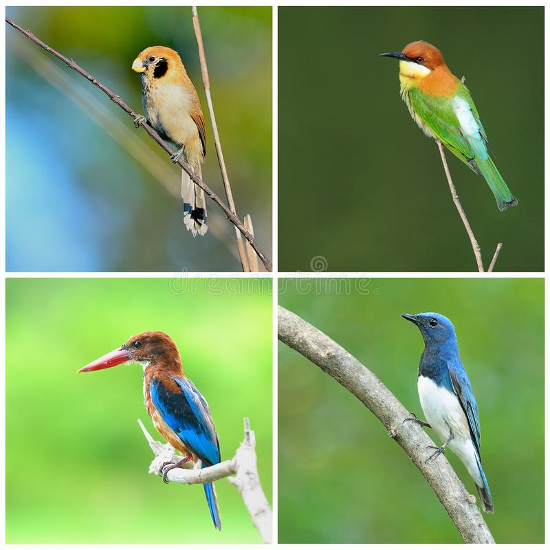 Inzameling van vogels royalty-vrije stock fotografie