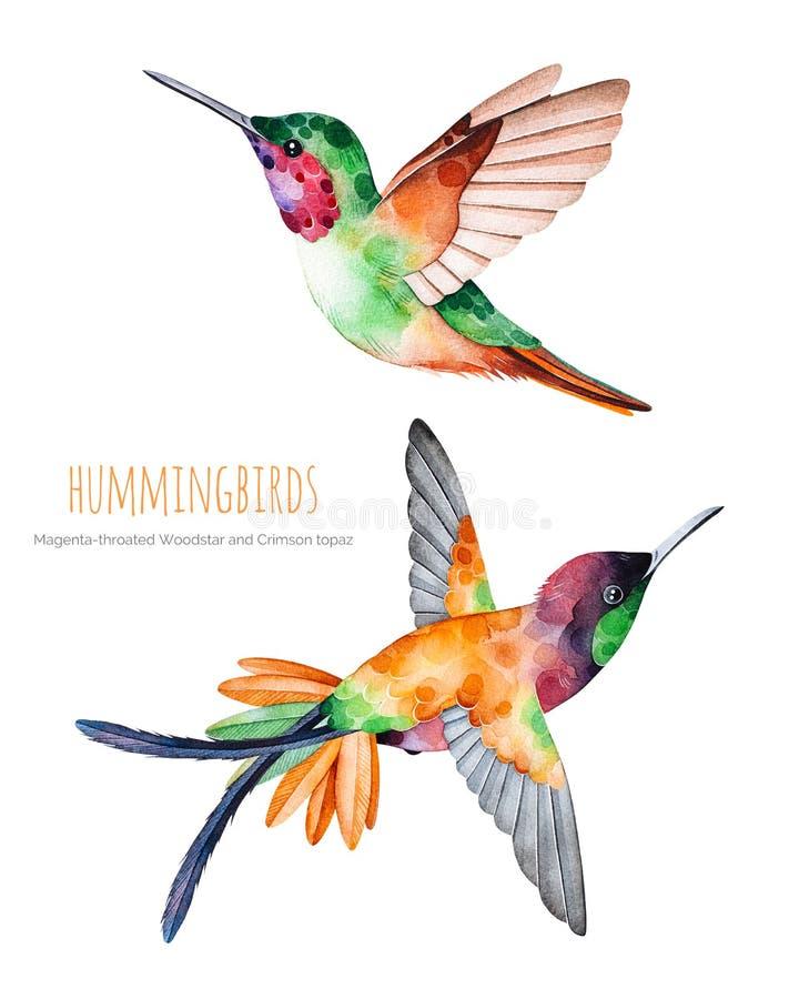 Inzameling van waterverf de exotische vogels vector illustratie