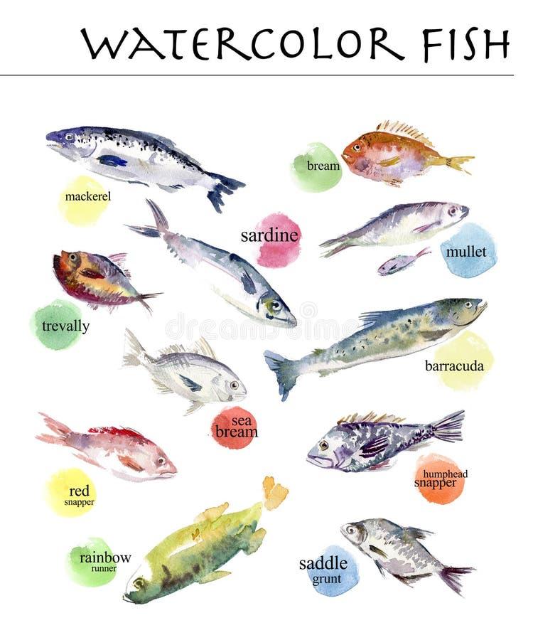 Inzameling van waterverfhand getrokken ondertekende vissen royalty-vrije illustratie