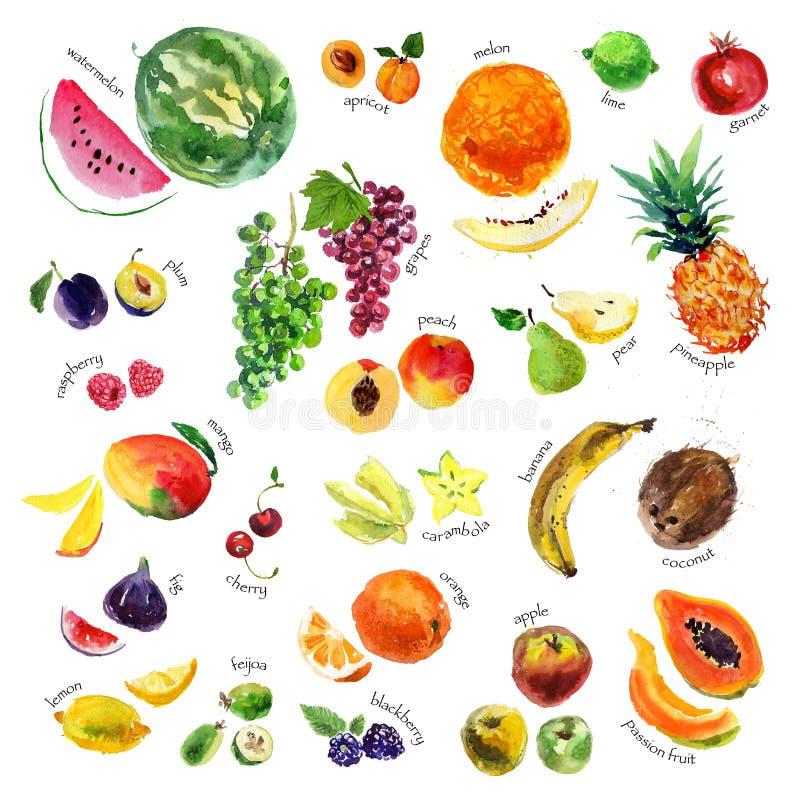 Inzameling van waterverfhand getrokken vruchten en bessen op witte achtergrond vector illustratie