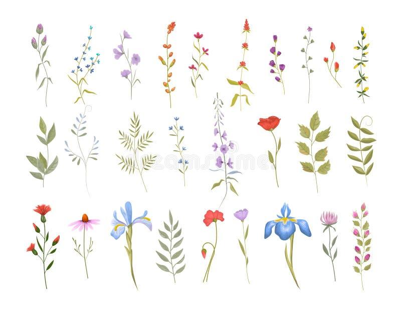 Inzameling van wilde bloemen Reeks bloemenelementen vector illustratie