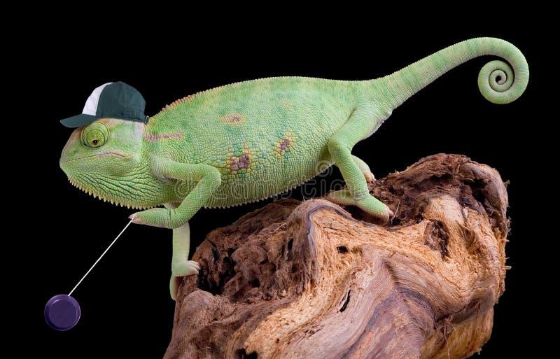 Io-io Do Chameleon Foto de Stock Royalty Free