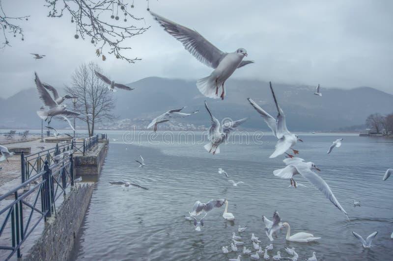 Ioannina Lake Greece royalty free stock photo