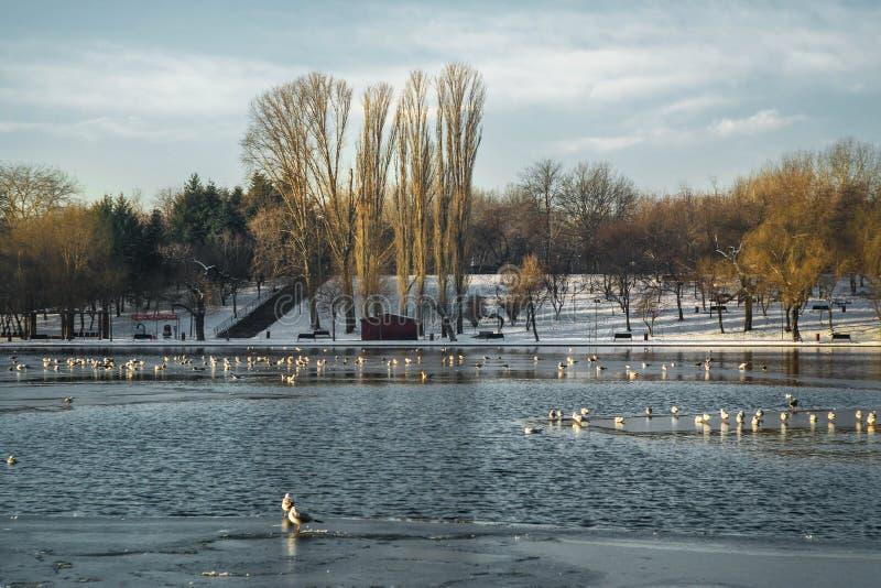 IOR Parc. Cold morning IOR Park, Bucharest, Romania stock photos