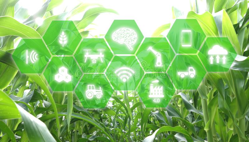 Iot, Διαδίκτυο των πραγμάτων, έννοια γεωργίας χρήση AI, έξυπνη ρομποτική τεχνητής νοημοσύνης για τη διαχείριση, έλεγχος, monitori στοκ εικόνες