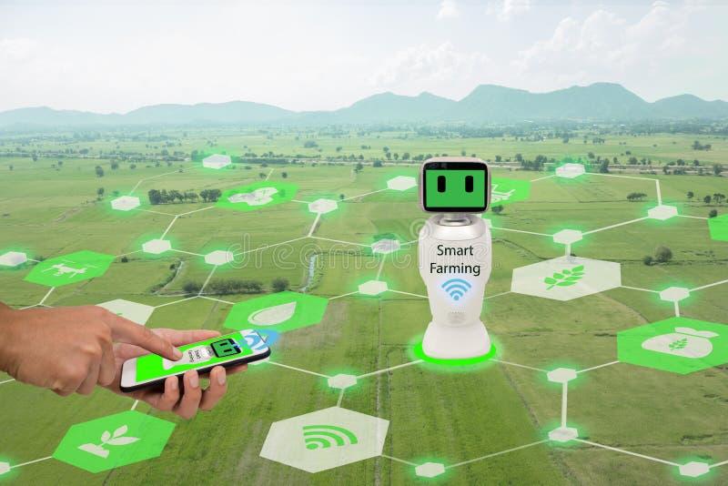 Iot, Internet das coisas, conceito da agricultura O telefone celular do uso do fazendeiro conecta a inteligência artificial robót imagens de stock royalty free