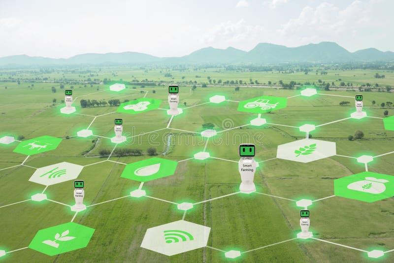 Iot, Internet das coisas, conceito da agricultura, uso robótico esperto do ai da inteligência artificial para a gestão, controle, fotos de stock