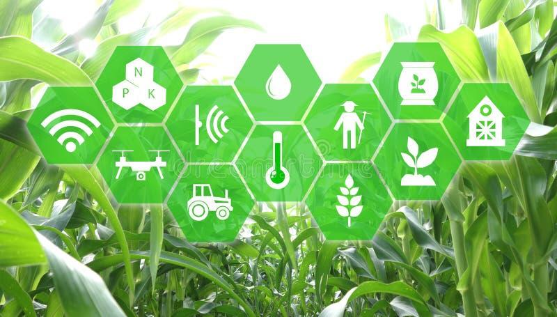 Iot, Internet das coisas, conceito da agricultura, uso robótico esperto do ai da inteligência artificial para a gestão, controle, ilustração royalty free