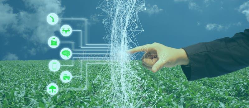Iot, Internet das coisas, conceito da agricultura, uso robótico esperto do ai da inteligência artificial para a gestão, controle, fotografia de stock royalty free