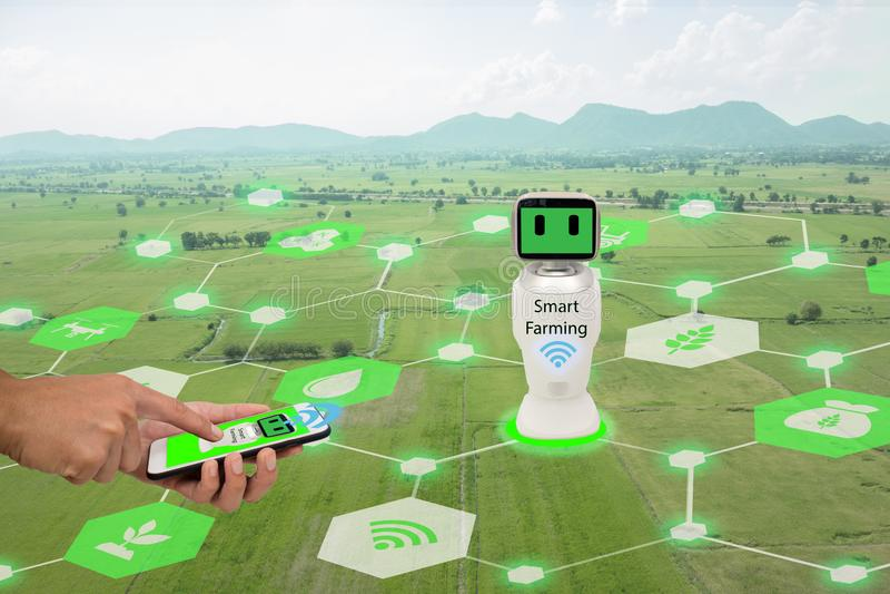Iot, internet rzeczy, rolnictwa pojęcie Średniorolny use telefon komórkowy łączy Mądrze Mechaniczną sztuczną inteligencję, ai use obrazy royalty free