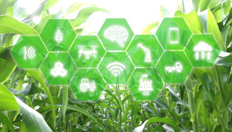 Iot, Internet von Sachen, Landwirtschaftskonzept, intelligenter künstliche Intelligenz ai-Robotergebrauch für Management, Steueru stockbilder