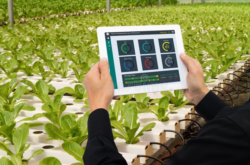 Iot przemysłu mądrze robot 4 (0) rolnictw pojęć, przemysłowy agronom, średniorolna używa pastylka monitorować, kontroluje warunek obraz royalty free